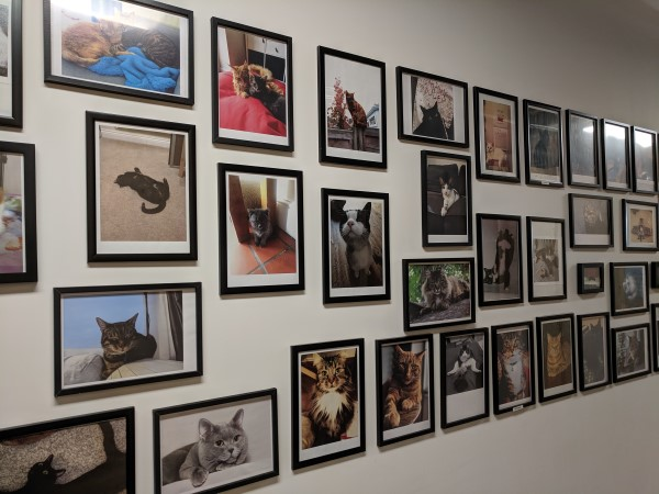 wall of cat pictures